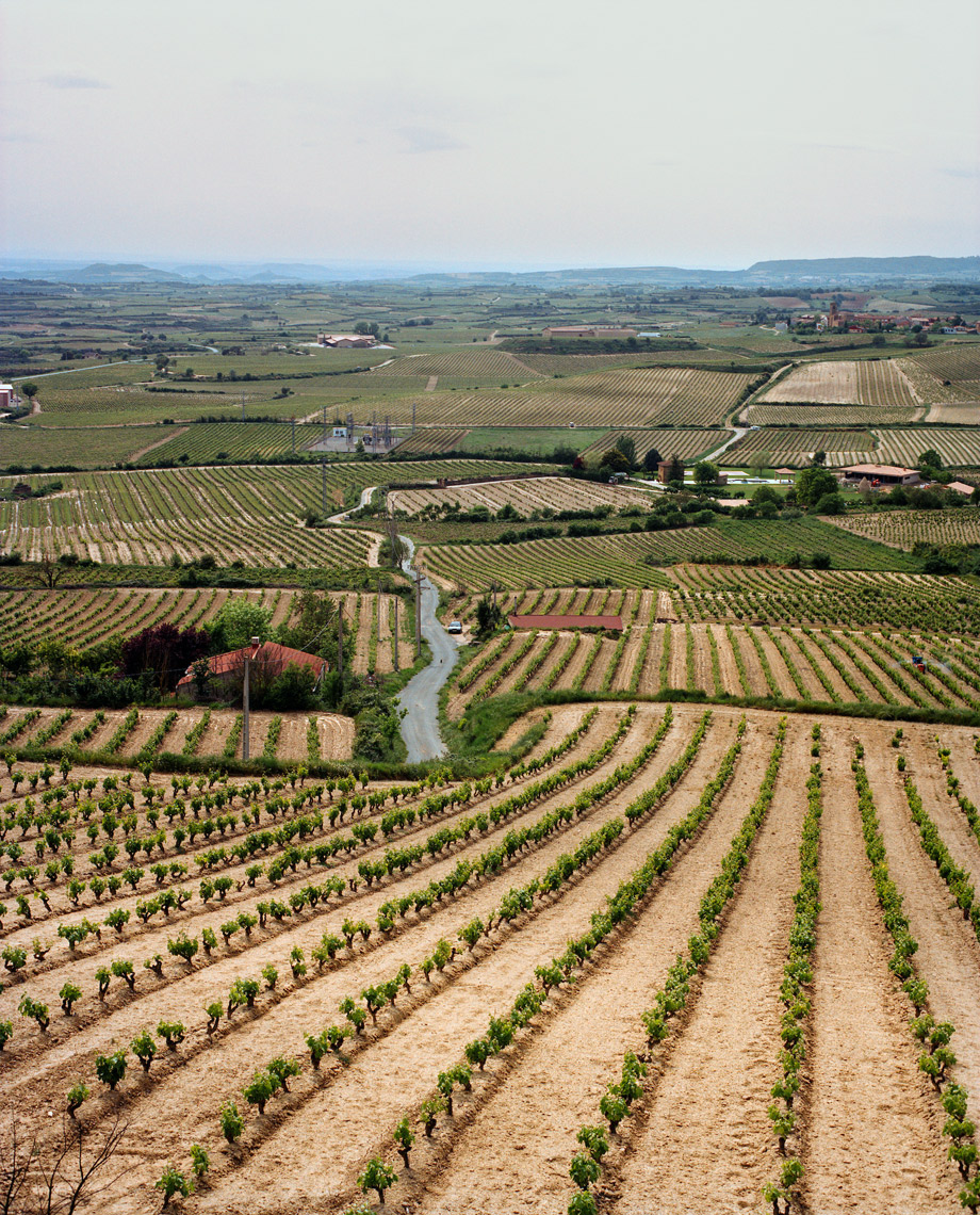 SPAIN, La Rioja, expanse of vineyard